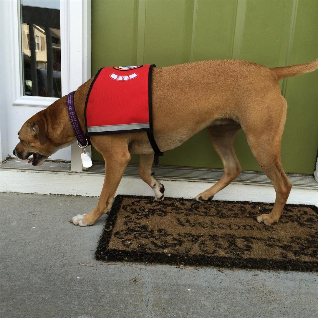 A Missouri group is fed up with online sites selling vests similar to ones service dogs wear. (KCTV5)