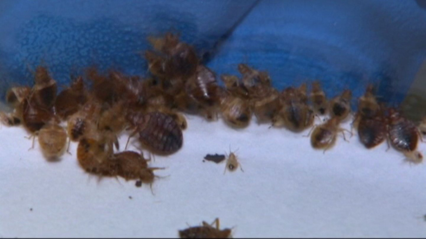 Exterminators are working to eradicate a bed bug infestation at a Lawrence call center that does data management for the federal government. (KCTV5)