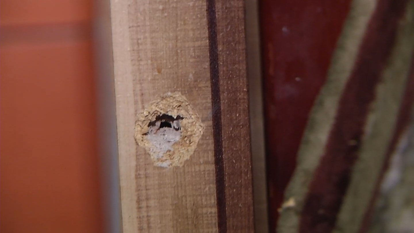 The family let KCTV5 into their home shortly after the shooting. Bullet holes were found throughout the home.(KCTV5)
