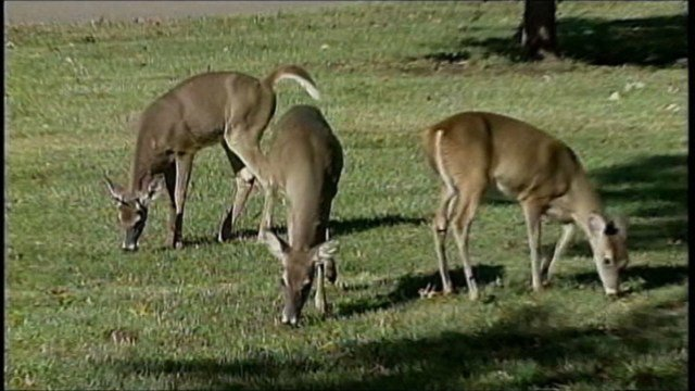 The Columbia Missourian reports that Knob Noster State Park will be closed Dec. 9-10. (KCTV5)