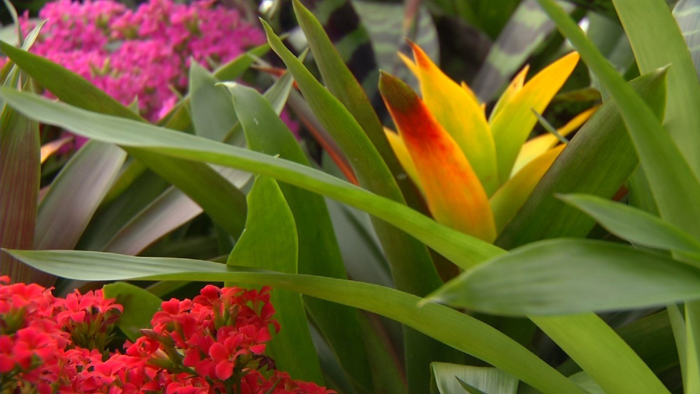 Studies are showing how beneficial indoor plants can be especially in winter. (KCTV5)