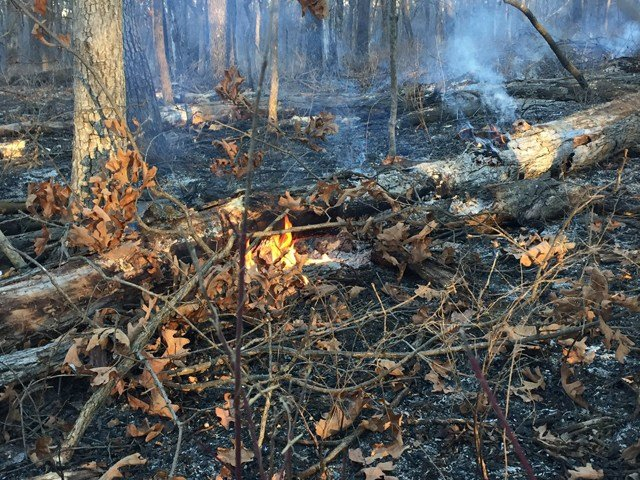 A fire spanning 50 acres broke out about 1 a.m. at Shawnee Mission Park. (KCTV5)