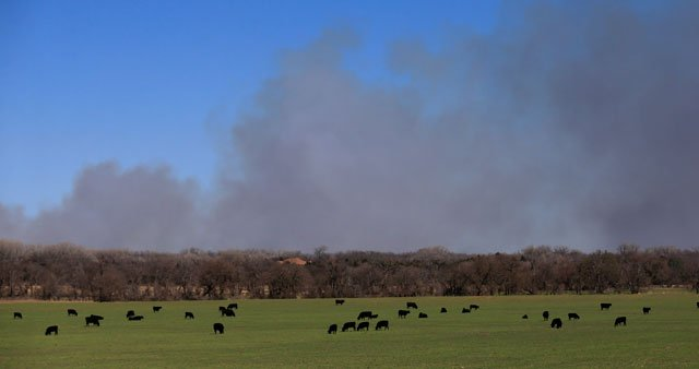 Cattle graze with a background of smoke from wildfires near Hutchinson, Kan., Tuesday, March 7, 2017. Fires raged in parts of Kansas, Oklahoma, Texas and Colorado, and warnings that conditions were ripe were issued for Iowa, Missouri and Nebraska. (AP)