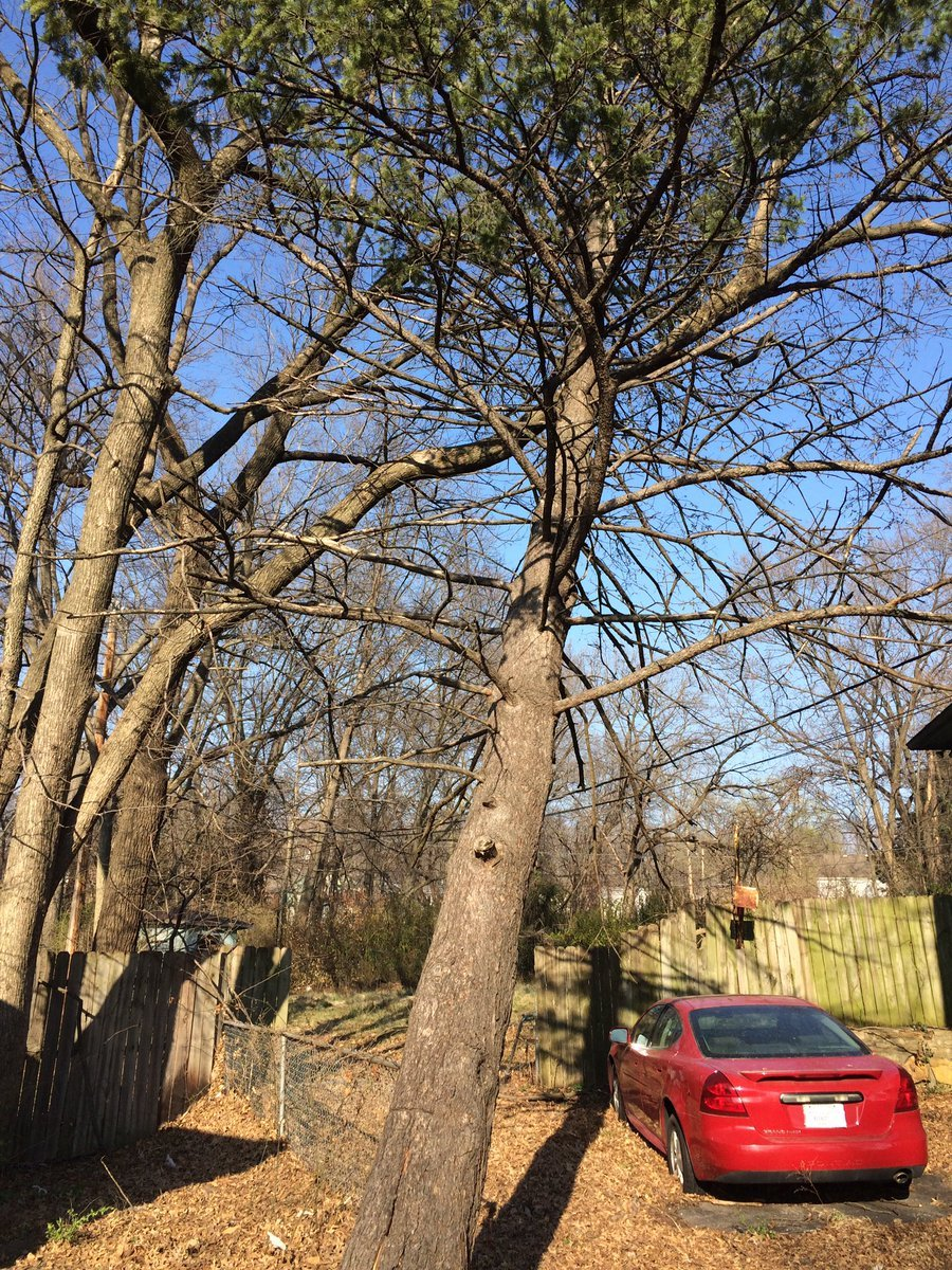 A Kansas City, KS woman says a tree threatens her house, but she's running into a bureaucratic mess to fix the problem. (Angie Ricono/KCTV5 News)