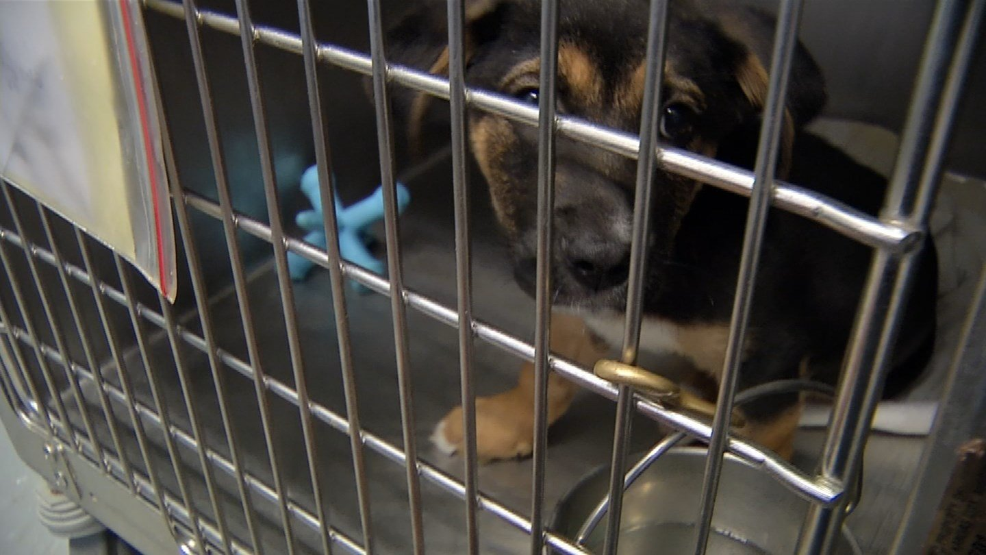 The KC Pet Project shelter exists in a building that wasn't designed to house animals and it is becoming increasingly run down. Voters will soon have the chance to vote on whether to fund a new building. (KCTV)
