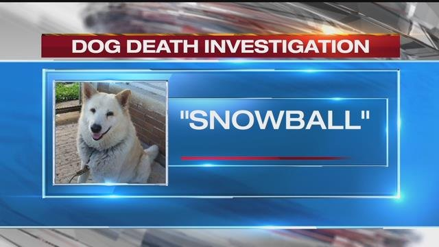 Authorities are seeking information in the brutal beating and death of a dog who was leashed in his yard in Excelsior Springs. (KCTV)