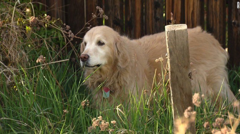 A Colorado dog owner is asking marijuana users to be more careful with their leftover pot. (CNN)