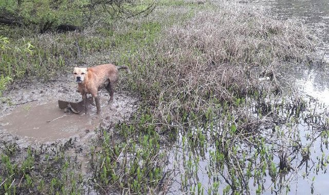 An animal-welfare group is asking for the public's help in identifying the person it said chained a dog to a cinder block and left him to drown at a Kansas City-area reservoir before he was rescued. (Great Plains SPCA)