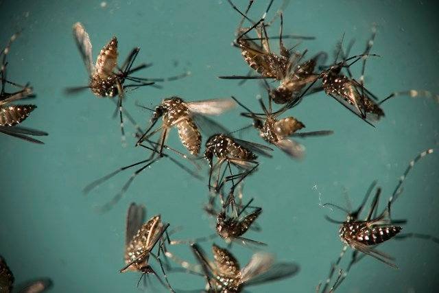 Experts say they want people to be aware of Zika virus and know how to protect themselves. (AP)