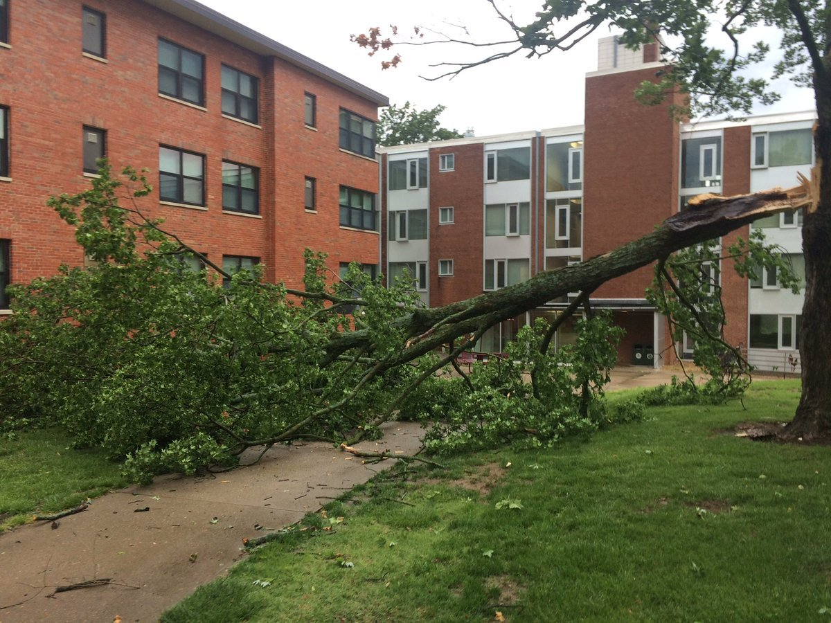 A picture of one of the large trees that fell on the UCM campus. (KCTV)