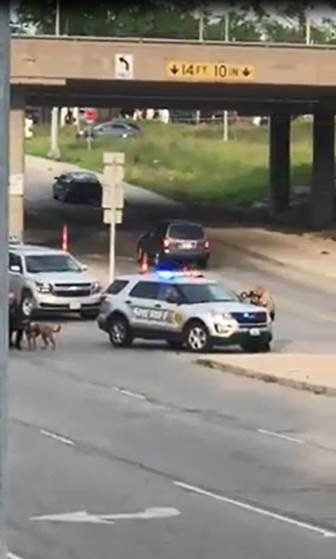 One person is in custody after a car chase ended at I-29 and NW 72nd St. (Photo provided by Kyle Schwartz)