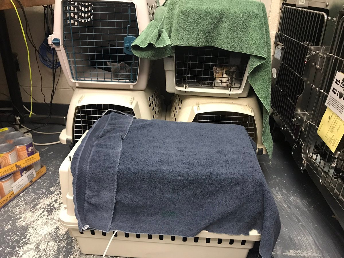Fifteen cats and kittens are recovering after being found in a hot car in a parking lot. (Credit: KC Pet Project)