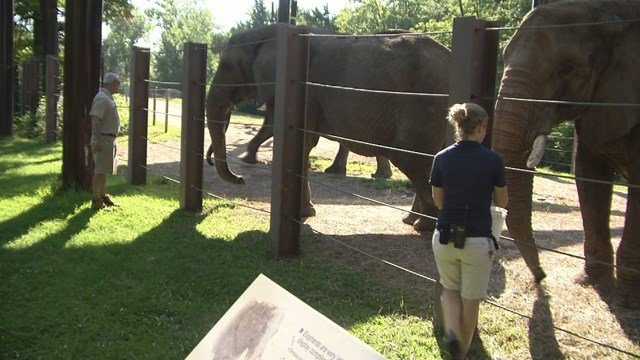 Several animals got special treats Thursday to keep cool in the brutal heat. (KCTV5)
