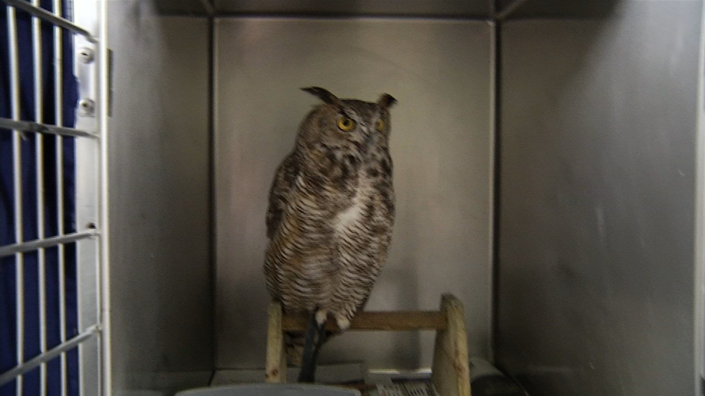 A wildlife clinic is overwhelmed with injured and orphaned animals after strong storms pounded the metro.(KCTV5)