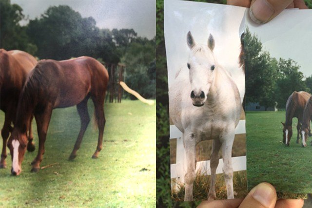 Lyda (gray Arabian) and Agape (brown chestnut) went missing after floods near Wolf Creek. (Stephanie Kayser/KCTV5).