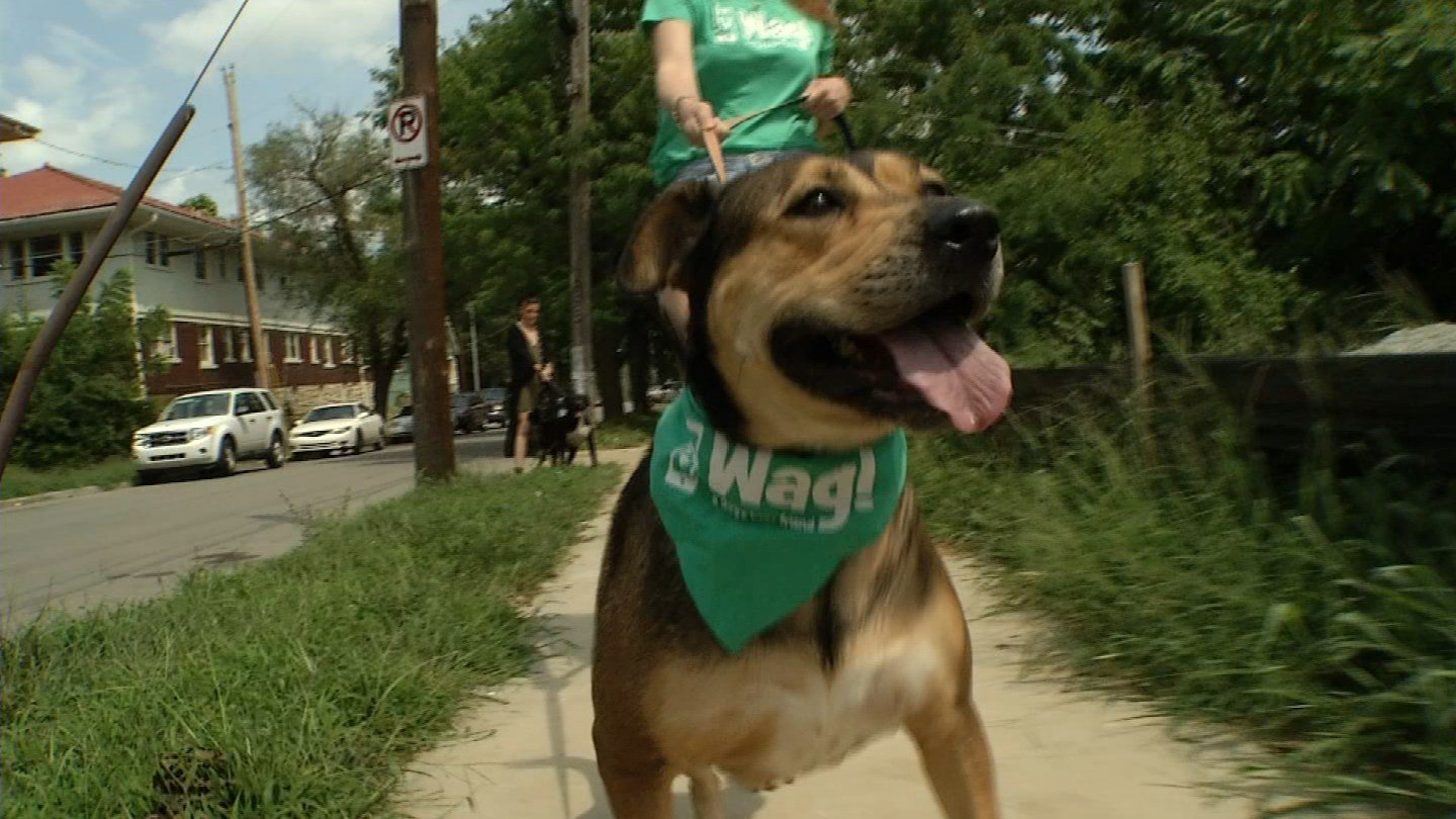 If you struggle to take your dog on a walk amid a busy schedule, a new app is gaining popularity. It's called Wag, and it's really easy to use. (KCTV5)