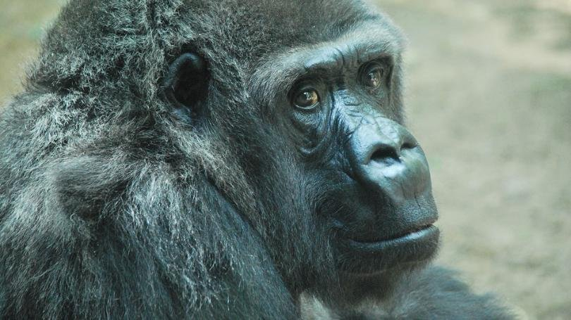 A longtime inhabitant of the Topeka Zoo has passed away. (Courtesy of the Topeka Zoo)
