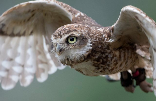 Signs warn people to be careful of an owl after a handful of attacks where runners say they've heard a swoosh before getting hit. (AP)