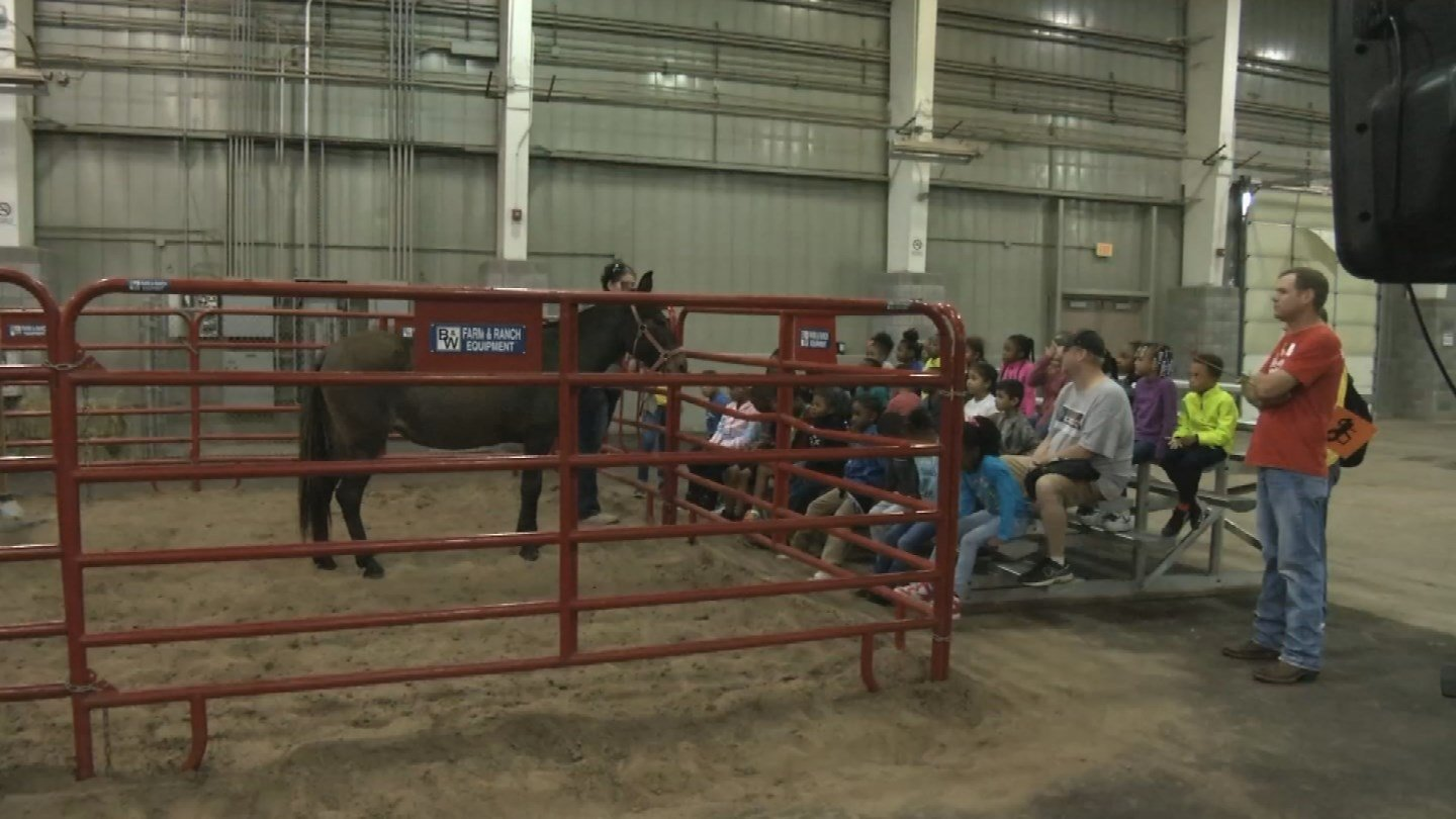 Kids from all around the metro are getting the chance to learn about agriculture at the American Royal this week. (KCTV5)