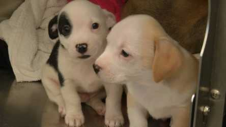 Local animal shelters and veterinarians are dealing with a spike in deadly and contagious parvovirus in dogs. (Natalie Davis)