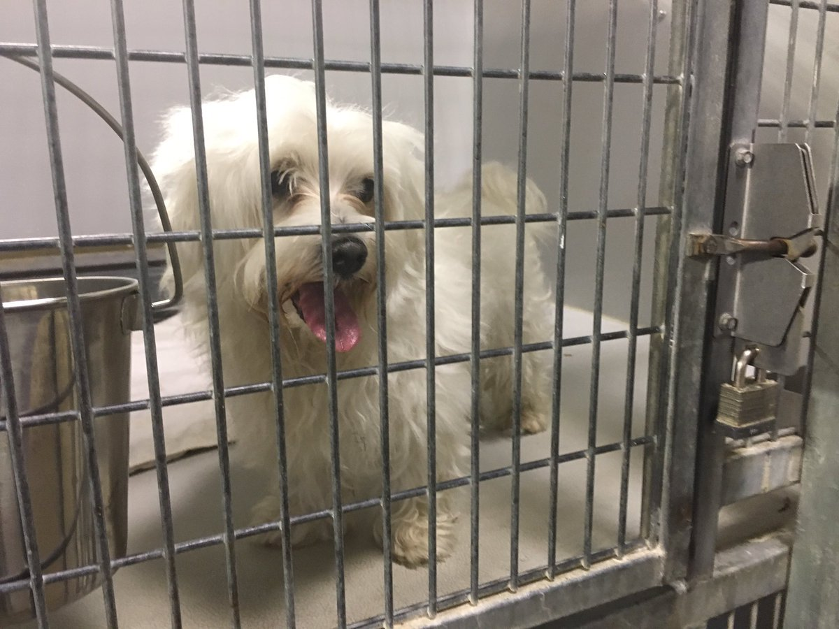At the KC Pet Project, they started the day with about a dozen more dogs than they can handle. The dogs are hoping to find their forever home.(Kelli Taylor/KCTV5 News)