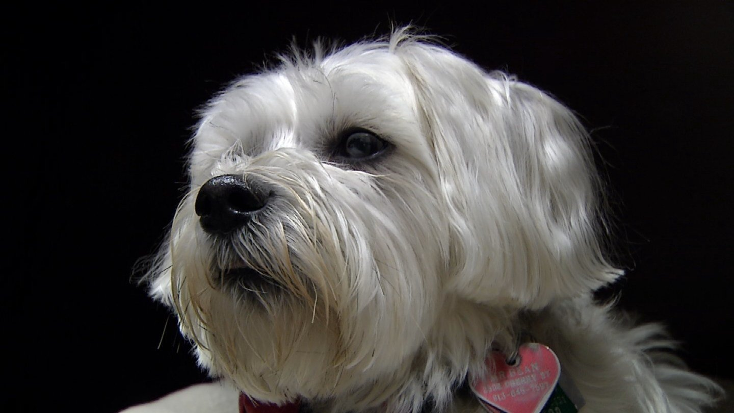 Mr. Bean is an 8-year-old mixed breed rescue who calls the Ronald McDonald House home. (KCTV5)