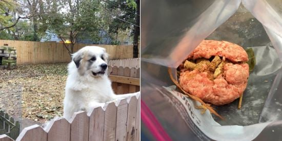 A woman in the Waldo neighborhood of Kansas City believes her dog was intentionally poisoned. (Kelli Taylor/KCTV5 News)