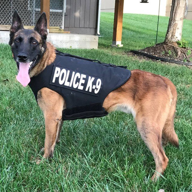 K9 Dax received the vest, donated by Vested Interest in K9's Inc. inEast Taunton, MA. (Facebook/Kansas City, Kansas Police Department)