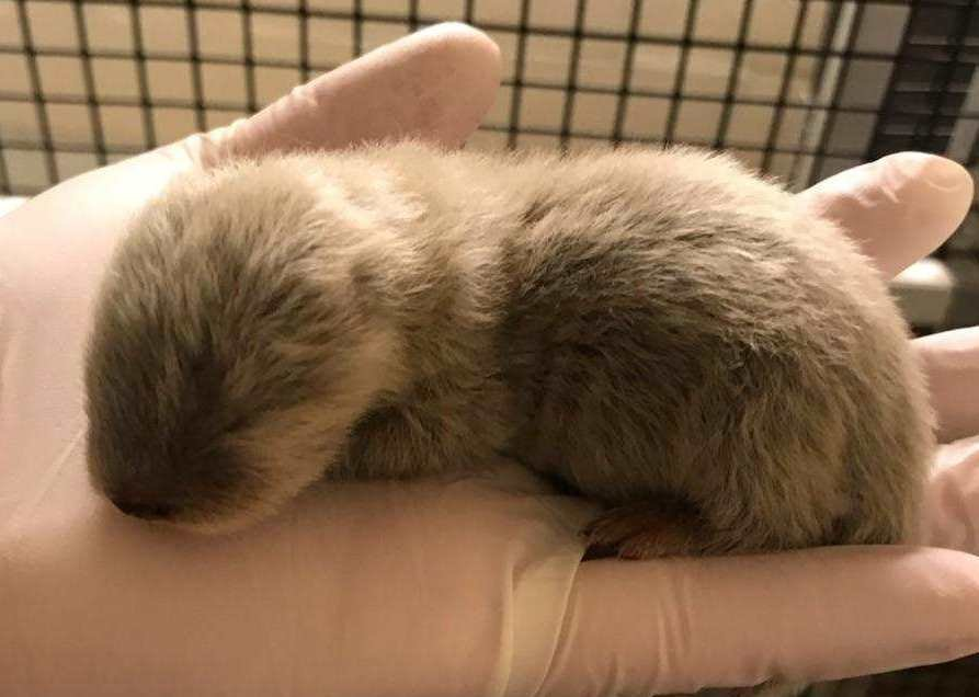 The zoo is now asking for help in naming theboy and girl. (Kansas City Zoo)
