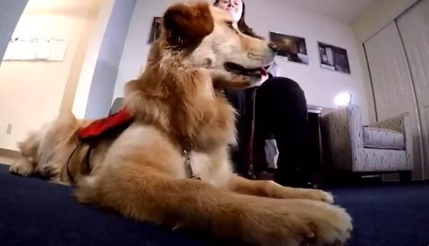 """this morning doggy dating The week in good news: a generous town, dogs and dating get the morning briefing by """"having a dog really says something about you,"""" said."""