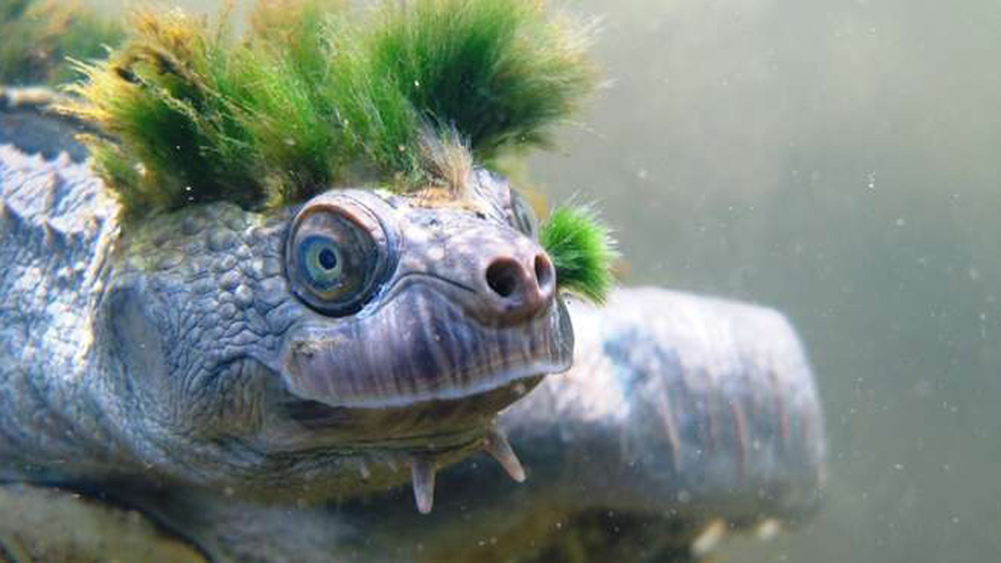 channel 4 dating tortoise for sale