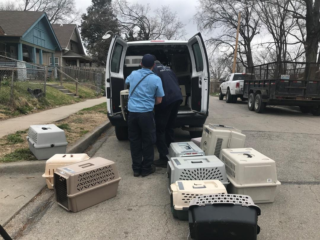 More than 100 birds have been rescued Monday in an alleged cockfighting ring. (Emily/Rittman/KCTV5 News)