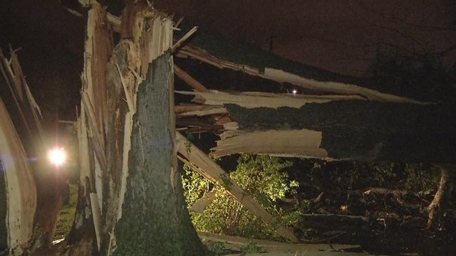 The tree went through two bedrooms and damaged the home's roof and attic, leaving parts of the attic sitting in those bedrooms. (KCTV5)