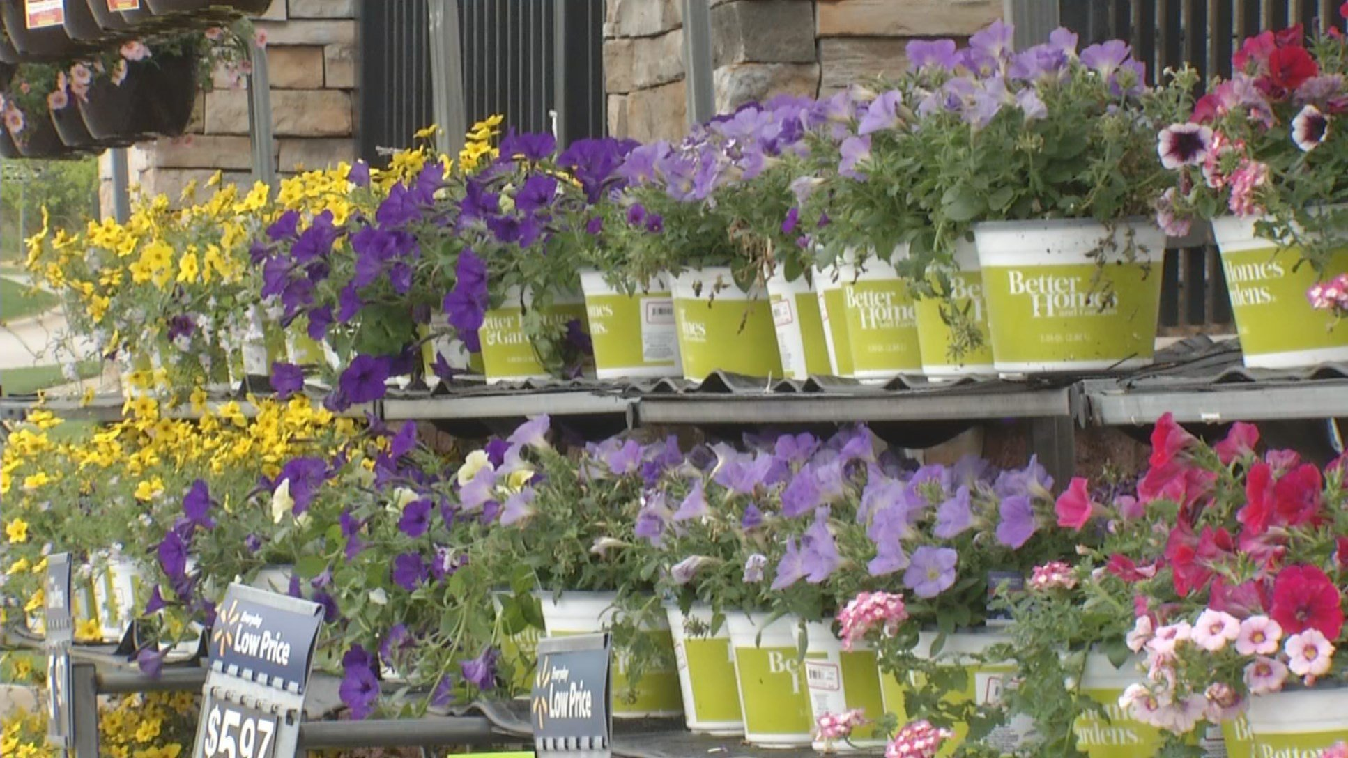 Better Homes & Gardens has released a new line of live plants that are being sold exclusively at your local Walmart Garden Center. (KCTV5)