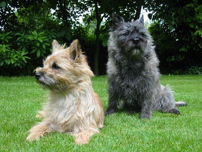 "A Kansas House committee on Tuesday declined to hear a bill that would have named the cairn terrier the official state dog. The breed is best known in Kansas for playing Toto in ""The Wizard of Oz."""