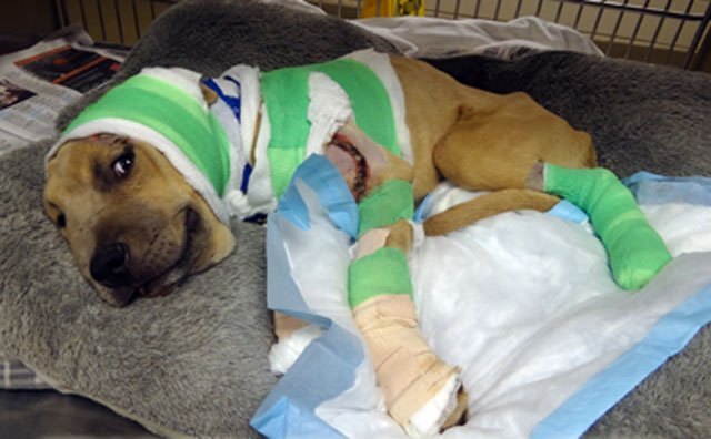 The puppy, nicknamed Trooper, was dragged for more than a mile until the driver of the vehicle pulled over in confusion and discovered the dog.