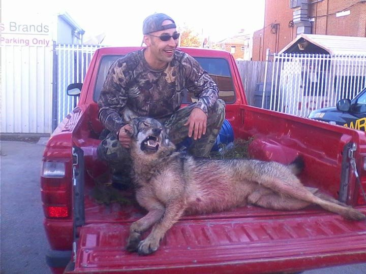 The hunter who shot the animal in Howard County in October thought it was a coyote, but the Conservation Department said Wednesday the remains are actually those of a gray wolf. (Source: Facebook)