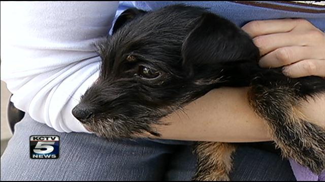 Kia lived several weeks inside a locked car at Kansas City's tow lot.