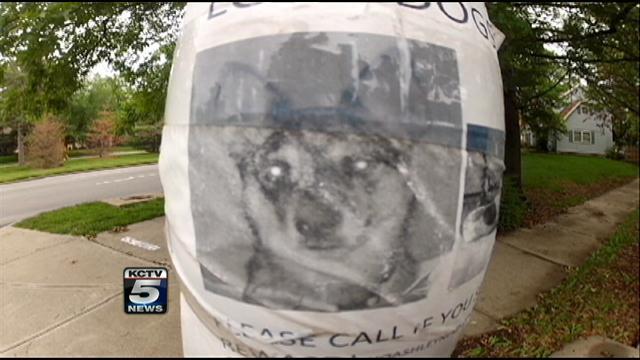 Pet-flipping' scam targets dog lovers in Kansas City - KCTV5