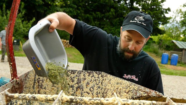 Jeremy Gross adds leaves, stems, and other byproducts of medical marijuana to a feed mixer, Tuesday, June 18, 2013 on his farm in Snohomish, Wash. Gross is trying to produce pork products with a unique savory taste. (AP Photo/Ted S. Warren)