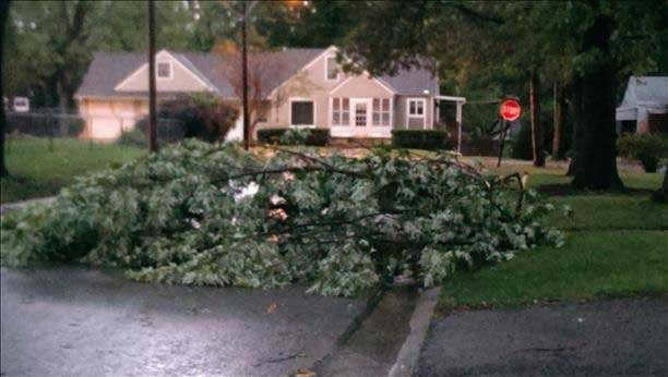 Downed tree in Mission