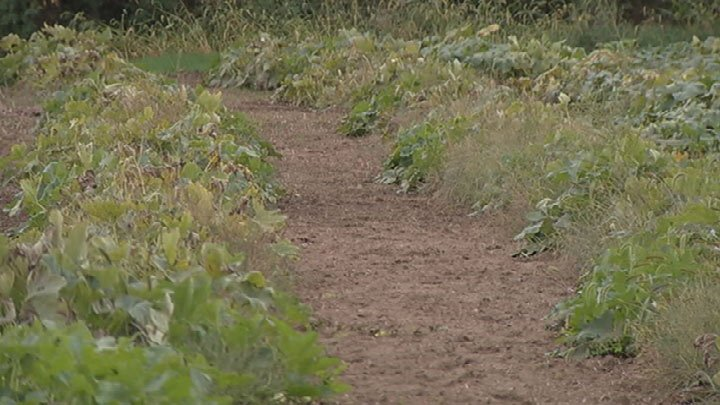 Kc Pumpkin Patch Has Opposition From Potential New