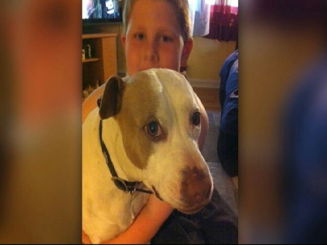 The Bonner Springs city council voted unanimously Monday night to end the city's ban on pit bulls.