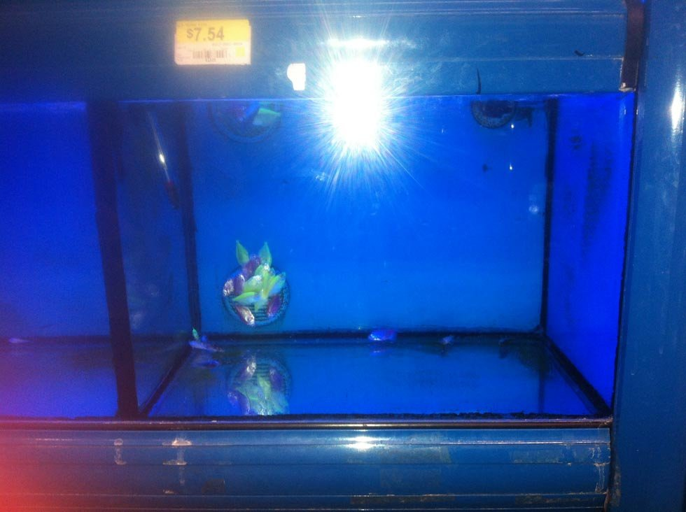 Concerns after dead fish found floating in tanks at for Walmart fish tank