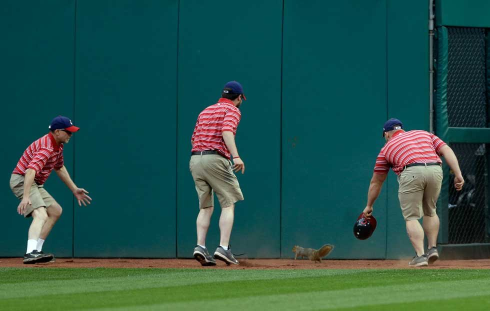 Indians ground crews try unsuccessfully to corral squirrel