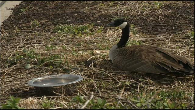 canada goose macy's