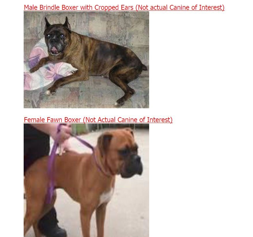 Lower photo shows example of dog police are looking for.