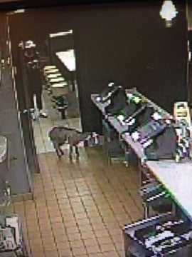The stolen goat wound up in at McDonald's at West 151st Street and Black Bob Road in Olathe about 2 a.m. Sunday.