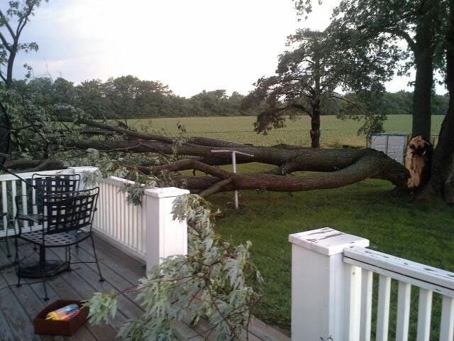 A tree fell over in Cathy Breithaupt's yard in Rantoul, KS. (Submitted photo)