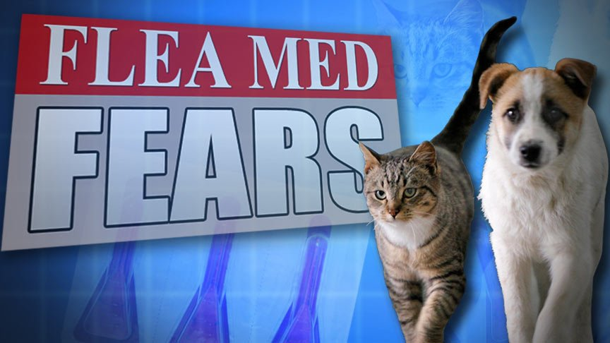Veterinarians recommends applying the flea control only when pet owners will be home with their pet for a few hours to watch for symptoms of pyrethrin toxicity.